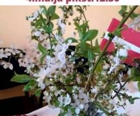 4. maijā Informācijas centrā iebraucējiem notiks Baltā galdauta svētki